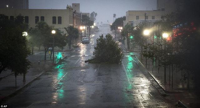 Cây cối bị bão quật ngã ở TP Corpus Christi. Ảnh: AP