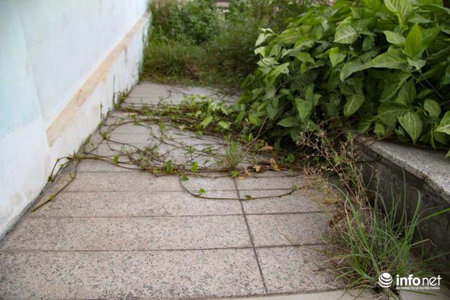 Sau đề xuất của Hanco3, Thành ủy Hà Nội đã có văn bản số 1274 ngày 18/7/2017 yêu cầu chủ đầu tư lập hai phương án: Một là cải tạo, sửa chữa khu nhà để làm nhà ở xã hội. Hai là phá bỏ hoàn toàn để xây dựng quỹ nhà mới. (Trong ảnh:Lối lên xuống vào tòa nhà cũng đã bị cây cỏ mọc che kín khi bị bỏ hoang thời gian dài.)