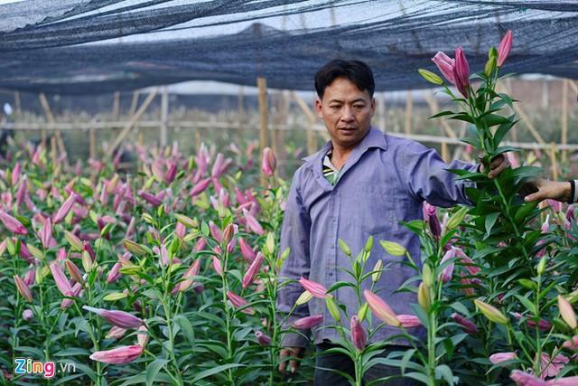 3 sào ly của gia đình nhà anh Nguyễn Hưng thiệt hại gần 50 triệu đồng vì hoa nở sớm. Số còn lại nở cũng không đẹp.