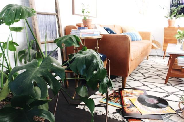 Mỗi góc trong nhà đều được lấp đầy bởi xương rồng và sen đá, cùng các loại cây xanh treo khác.