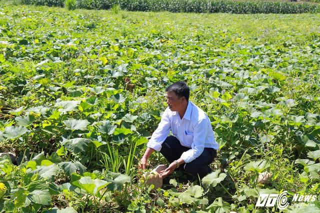 Phó Chủ tịch xã Cư Yang kêu gọi cộng đồng chung tay giải cứu bí đỏ giúp người dân. (Ảnh: Thanh Hải)
