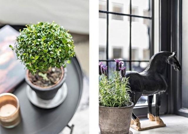 Những chậu cây xanh nhỏ xinh cũng được chủ nhà tận dụng để đưa vào từng góc nhỏ nơi phòng khách mang lại màu xanh tươi mát và thổi bừng sức sống cho không gian.