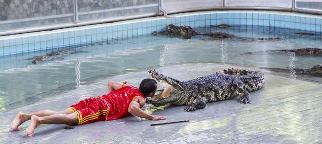 Nghề này có thể đi kèm với việc phụ chải răng cho cá sấu trong sở thú được!