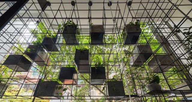 Ban công được trồng rất nhiều cây xanh mang không gian tươi mát cho căn hộ.