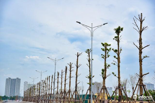 Tuyến đường được thiết kế với 3 hàng cây xanh, toàn tuyến cũng đã được trang bị đầy đủ hệ thống chiếu sáng đèn Led hiện đại.