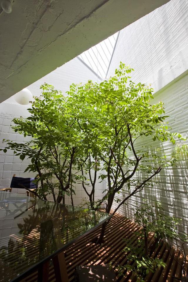 Các miếng sàn lam gỗ giúp ánh sáng có thể len lỏi xuyên xuống các tầng không gian bên dưới, tạo điều kiện cho cây xanh có thể phát triển một cách tự nhiên.