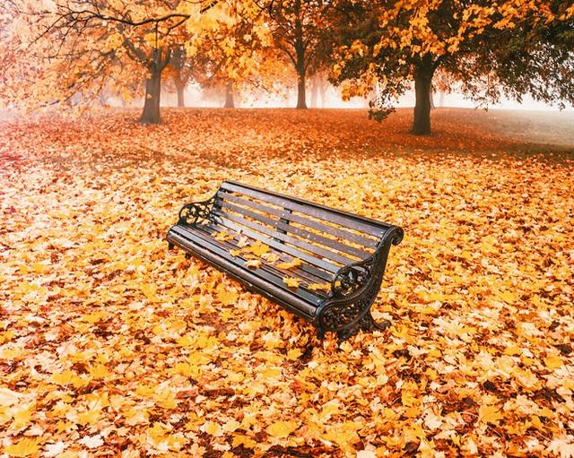 Ghế đá công viên tại thủ đô London, Anh.