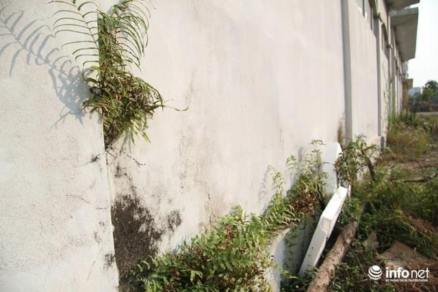 Vì đã bỏ hoang quá lâu không được sử dụng, nhiều hạng mục của 3 tòa nhà cũng đã có dấu hiệu Xuống cấp, nhiều nơi tường mọc dương xỉ.