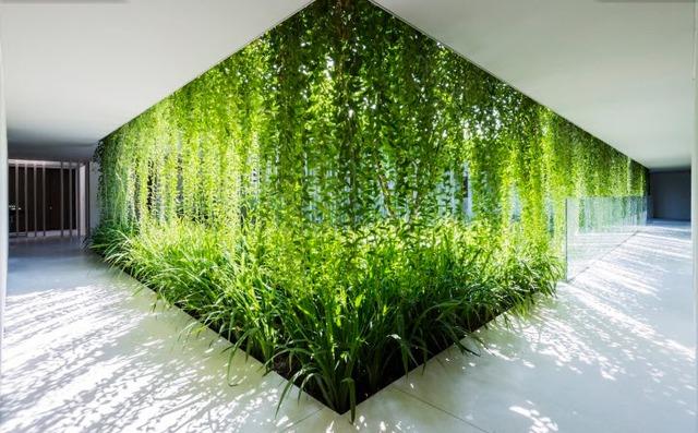 Ánh sáng như đang nhảy múa khi chiếu xuyên qua lớp tường vảy và thảm thực vật dày đặc
