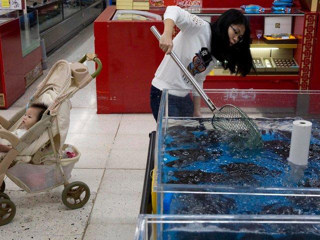 Khách hàng tự tay bắt những con cá và hải sản trong những bể chứa. Chúng đều còn sống.