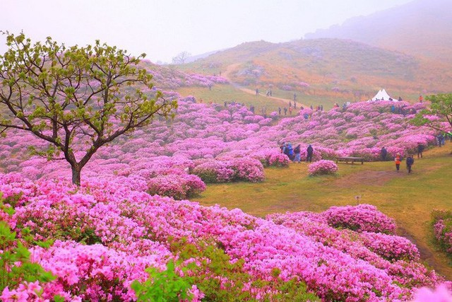 Thì ra vị HLV đáng kính của U23 Việt Nam Park Hang Seo từng sinh ra và lớn lên ở một vùng quê đẹp và yên bình đến vậy - Ảnh 8.