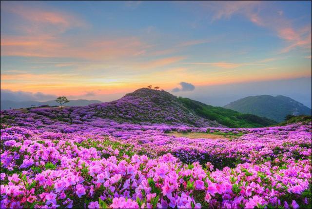 Thì ra vị HLV đáng kính của U23 Việt Nam Park Hang Seo từng sinh ra và lớn lên ở một vùng quê đẹp và yên bình đến vậy - Ảnh 9.