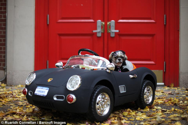 Không hề biết lái xe nhưng chú chó này sở hữu tận 4 chiếc siêu xe chính hãng, trong đó có cả Bentley và Ferrari - Ảnh 1.