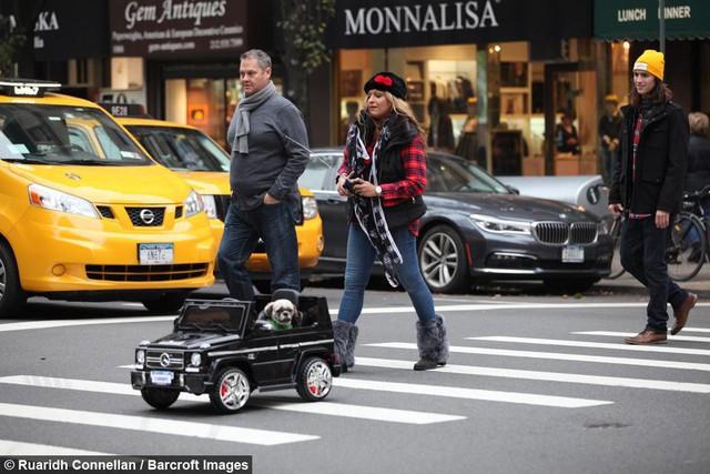 Không hề biết lái xe nhưng chú chó này sở hữu tận 4 chiếc siêu xe chính hãng, trong đó có cả Bentley và Ferrari - Ảnh 2.