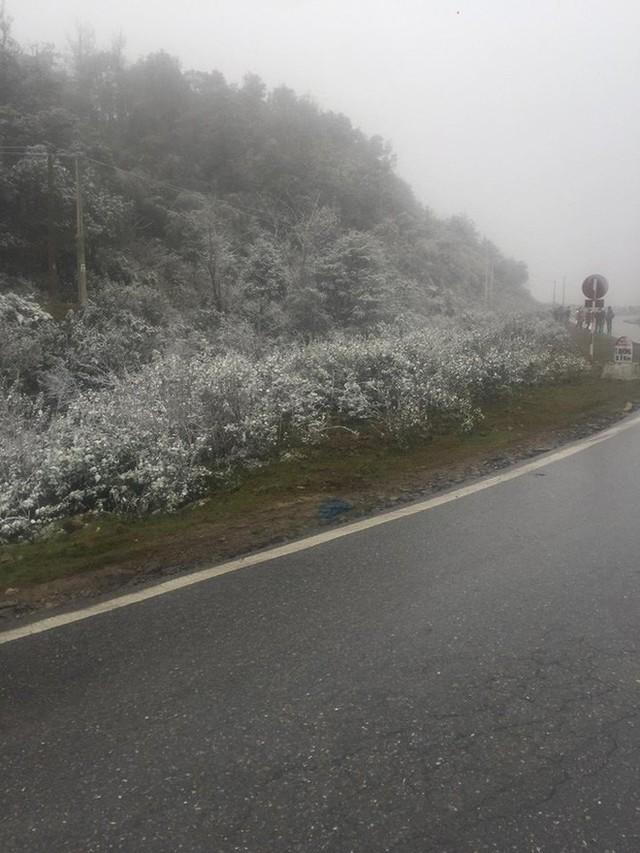 Sa Pa bất ngờ xuất hiện tuyết rơi dày đặc trong sáng nay - Ảnh 3.