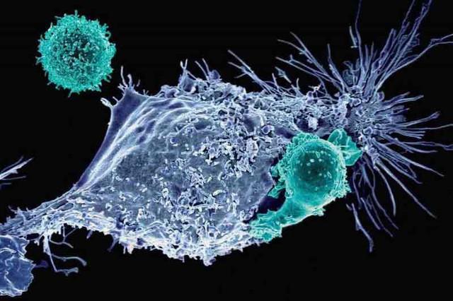 Đột phá điều trị ung thư giành giải Nobel Y học 2018, nhưng cụ thể đó là gì? - Ảnh 2.
