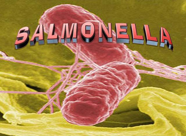 Vi khuẩn này có trong cơ thể người đang đứng trước tình trạng kháng thuốc, làm thế nào để bảo vệ bản thân mình? - Ảnh 1.