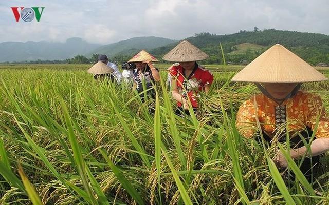 15 sản phẩm nông nghiệp được đề xuất là sản phẩm chủ lực quốc gia - Ảnh 2.