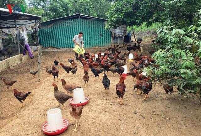 15 sản phẩm nông nghiệp được đề xuất là sản phẩm chủ lực quốc gia - Ảnh 13.