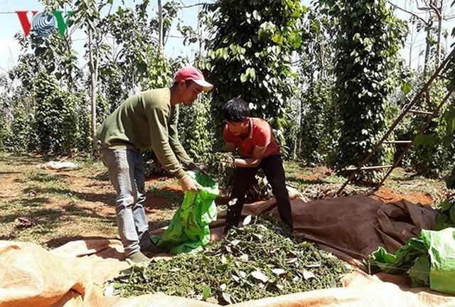 15 sản phẩm nông nghiệp được đề xuất là sản phẩm chủ lực quốc gia - Ảnh 6.