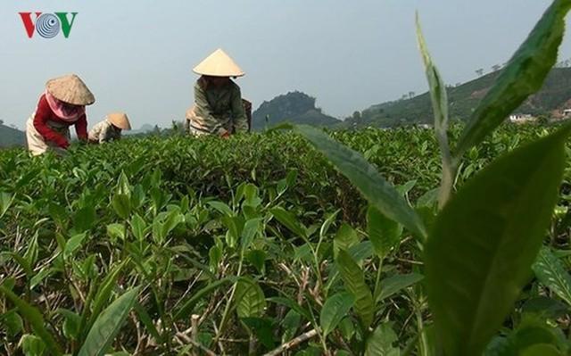 15 sản phẩm nông nghiệp được đề xuất là sản phẩm chủ lực quốc gia - Ảnh 7.