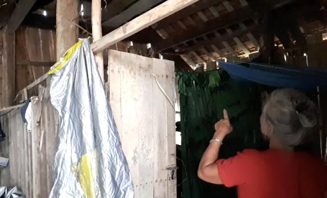 Một gia đình sống chung với hàng nghìn con ong vò vẽ kịch độc trong phòng ngủ - Ảnh 1.