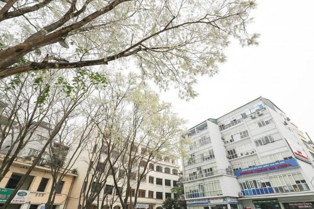 Cận cảnh vẻ đẹp lãng mạn của ĐH Quốc gia Hà Nội - Ngôi trường chiếm vị trí cao nhất ĐH Việt trong 2 BXH uy tín thế giới gần đây - Ảnh 5.
