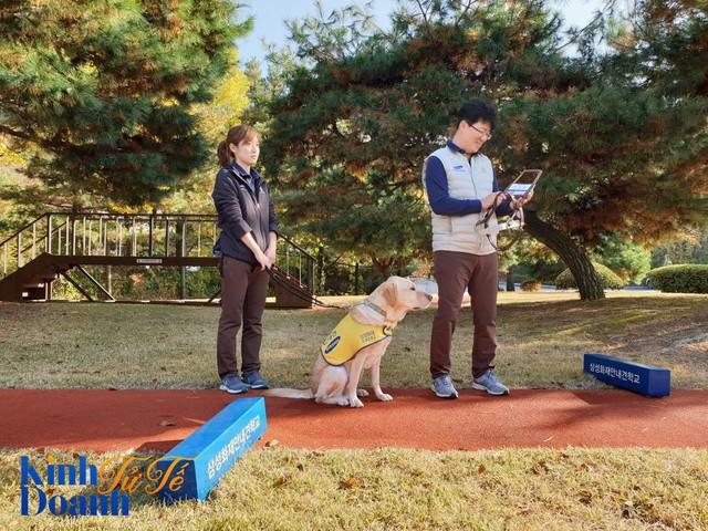 Ngôi trường dạy chó độc đáo nhất thế giới có gì đặc biệt? - Ảnh 2.