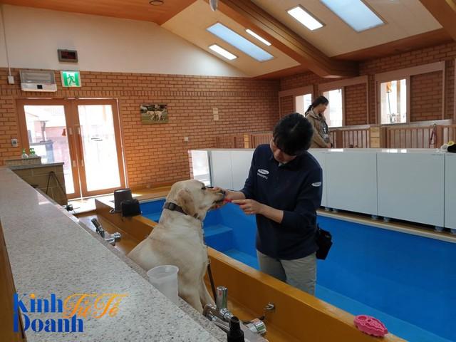 Ngôi trường dạy chó độc đáo nhất thế giới có gì đặc biệt? - Ảnh 4.