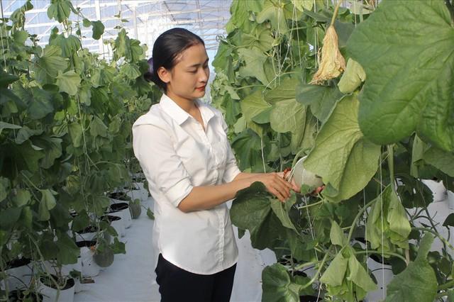 Hà Tĩnh: Cô gái 9x xinh đẹp nhận giải Lương Định Của nhờ 4000m2 nhà màng trồng dưa thu tiền tỷ - Ảnh 3.