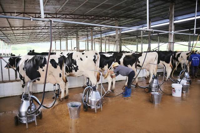 Phó TGĐ GTNfoods chia sẻ 4 bí quyết giúp công ty làm nông nghiệp thành công - Ảnh 2.