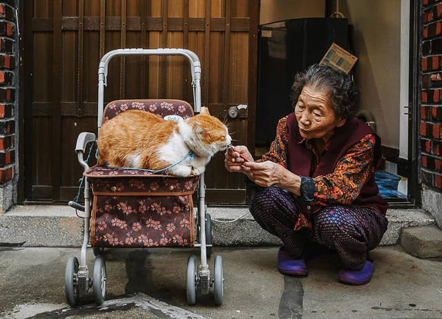 Bộ ảnh đầy cảm xúc của cụ bà Hàn Quốc: Tuổi già chẳng cần gì, chỉ cần một chú mèo béo bầu bạn thôi - Ảnh 1.