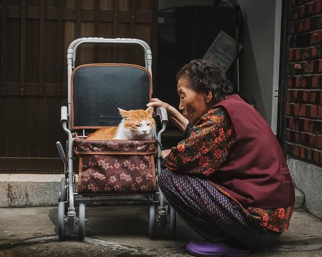 Bộ ảnh đầy cảm xúc của cụ bà Hàn Quốc: Tuổi già chẳng cần gì, chỉ cần một chú mèo béo bầu bạn thôi - Ảnh 2.