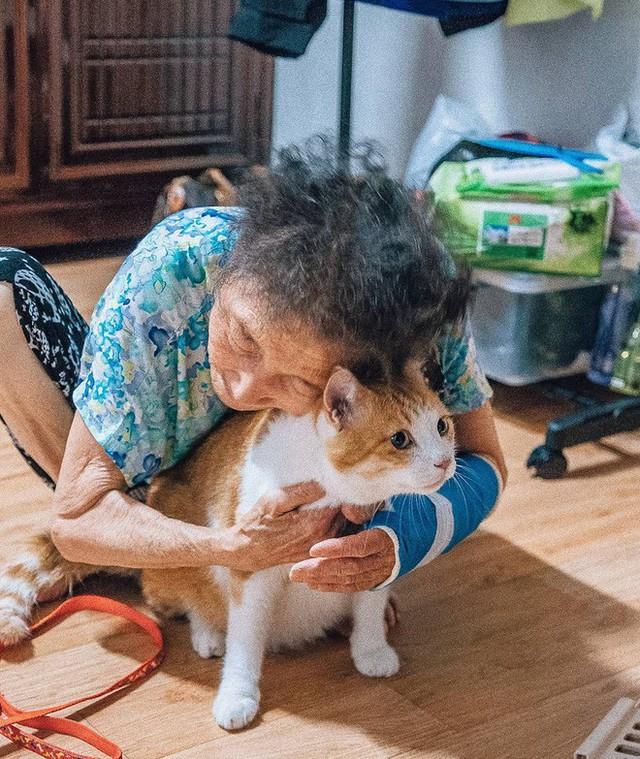 Bộ ảnh đầy cảm xúc của cụ bà Hàn Quốc: Tuổi già chẳng cần gì, chỉ cần một chú mèo béo bầu bạn thôi - Ảnh 12.
