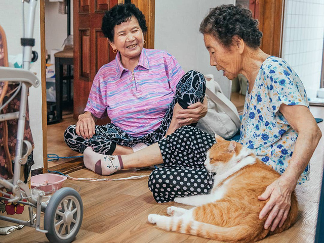 Bộ ảnh đầy cảm xúc của cụ bà Hàn Quốc: Tuổi già chẳng cần gì, chỉ cần một chú mèo béo bầu bạn thôi - Ảnh 13.