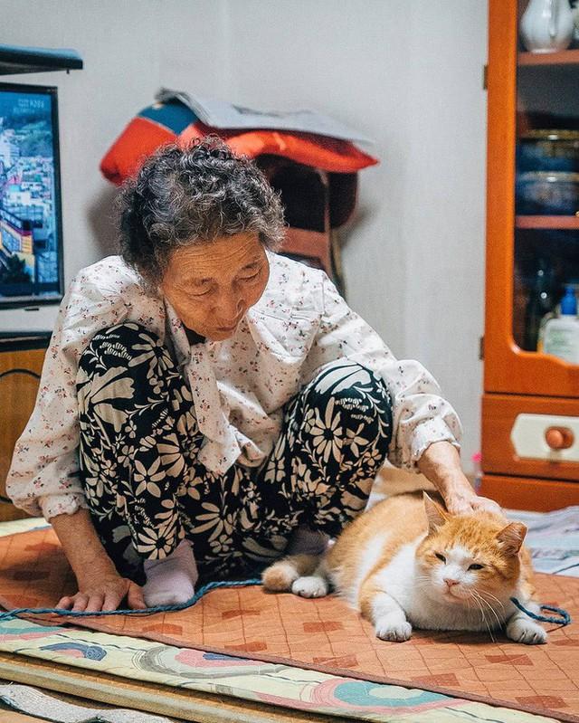 Bộ ảnh đầy cảm xúc của cụ bà Hàn Quốc: Tuổi già chẳng cần gì, chỉ cần một chú mèo béo bầu bạn thôi - Ảnh 14.