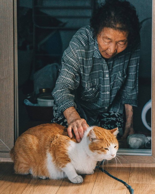 Bộ ảnh đầy cảm xúc của cụ bà Hàn Quốc: Tuổi già chẳng cần gì, chỉ cần một chú mèo béo bầu bạn thôi - Ảnh 15.