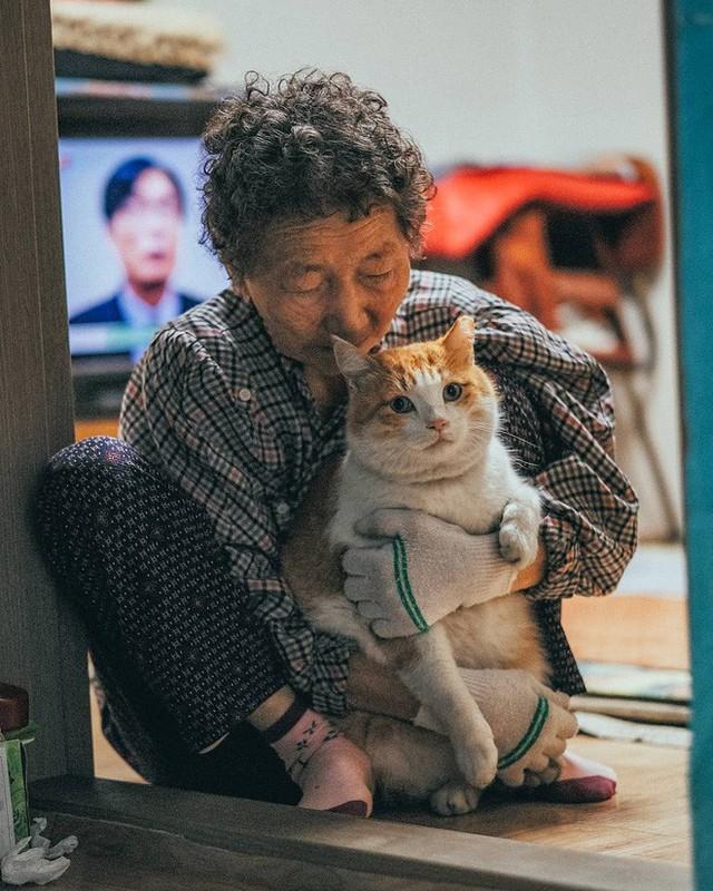 Bộ ảnh đầy cảm xúc của cụ bà Hàn Quốc: Tuổi già chẳng cần gì, chỉ cần một chú mèo béo bầu bạn thôi - Ảnh 16.