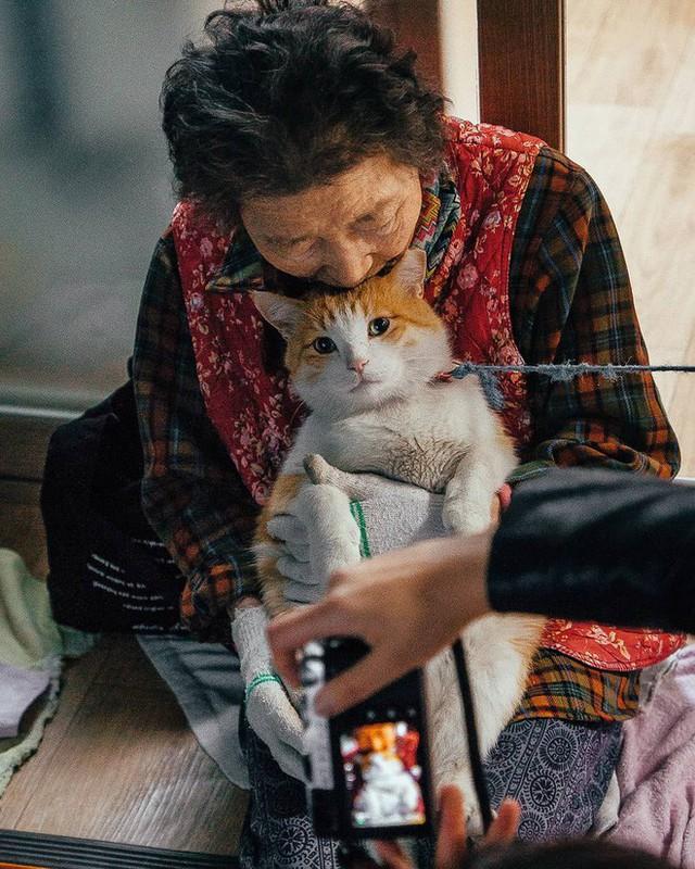 Bộ ảnh đầy cảm xúc của cụ bà Hàn Quốc: Tuổi già chẳng cần gì, chỉ cần một chú mèo béo bầu bạn thôi - Ảnh 17.