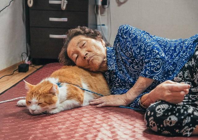 Bộ ảnh đầy cảm xúc của cụ bà Hàn Quốc: Tuổi già chẳng cần gì, chỉ cần một chú mèo béo bầu bạn thôi - Ảnh 18.