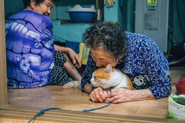 Bộ ảnh đầy cảm xúc của cụ bà Hàn Quốc: Tuổi già chẳng cần gì, chỉ cần một chú mèo béo bầu bạn thôi - Ảnh 19.