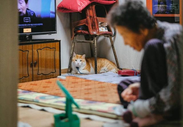 Bộ ảnh đầy cảm xúc của cụ bà Hàn Quốc: Tuổi già chẳng cần gì, chỉ cần một chú mèo béo bầu bạn thôi - Ảnh 20.