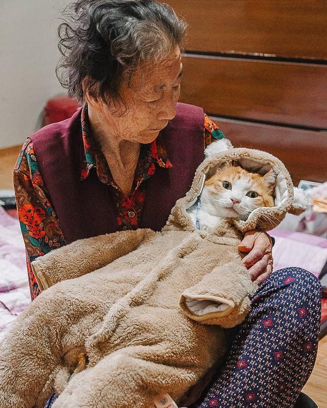 Bộ ảnh đầy cảm xúc của cụ bà Hàn Quốc: Tuổi già chẳng cần gì, chỉ cần một chú mèo béo bầu bạn thôi - Ảnh 3.