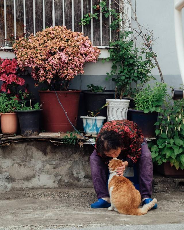 Bộ ảnh đầy cảm xúc của cụ bà Hàn Quốc: Tuổi già chẳng cần gì, chỉ cần một chú mèo béo bầu bạn thôi - Ảnh 21.