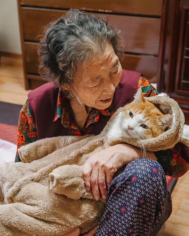 Bộ ảnh đầy cảm xúc của cụ bà Hàn Quốc: Tuổi già chẳng cần gì, chỉ cần một chú mèo béo bầu bạn thôi - Ảnh 4.