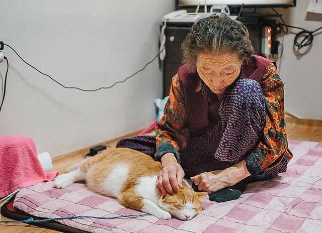 Bộ ảnh đầy cảm xúc của cụ bà Hàn Quốc: Tuổi già chẳng cần gì, chỉ cần một chú mèo béo bầu bạn thôi - Ảnh 5.