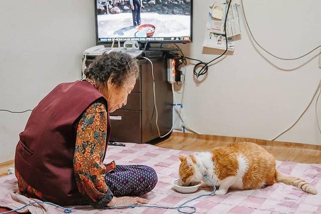 Bộ ảnh đầy cảm xúc của cụ bà Hàn Quốc: Tuổi già chẳng cần gì, chỉ cần một chú mèo béo bầu bạn thôi - Ảnh 6.