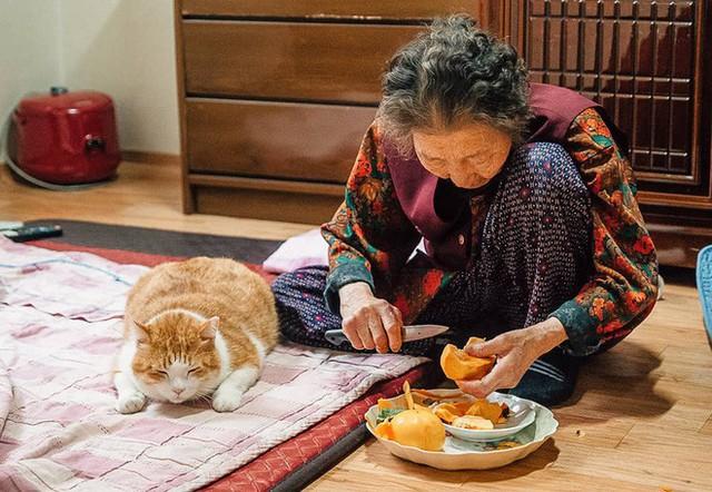 Bộ ảnh đầy cảm xúc của cụ bà Hàn Quốc: Tuổi già chẳng cần gì, chỉ cần một chú mèo béo bầu bạn thôi - Ảnh 7.