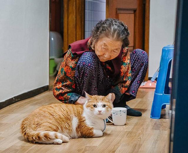 Bộ ảnh đầy cảm xúc của cụ bà Hàn Quốc: Tuổi già chẳng cần gì, chỉ cần một chú mèo béo bầu bạn thôi - Ảnh 8.
