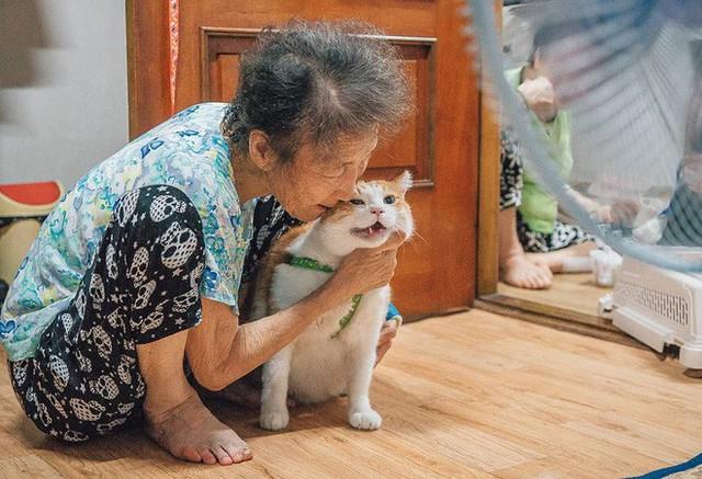 Bộ ảnh đầy cảm xúc của cụ bà Hàn Quốc: Tuổi già chẳng cần gì, chỉ cần một chú mèo béo bầu bạn thôi - Ảnh 9.
